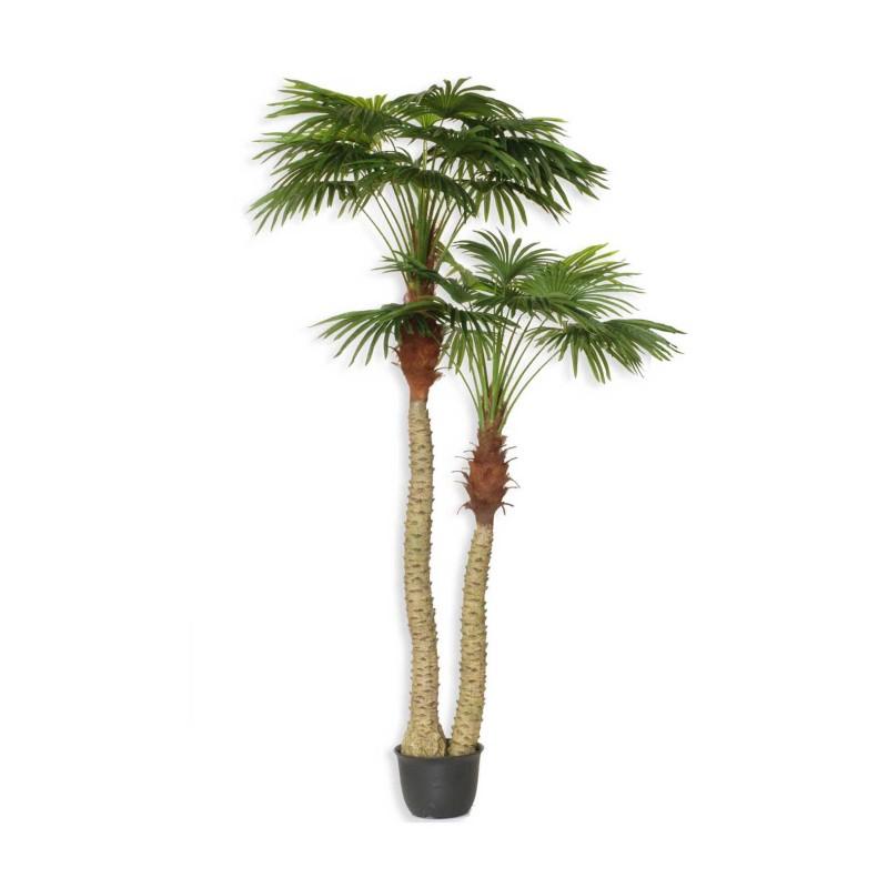 Pianta palma cm250 pn350 00 14113371 piante e fiori for Pianta palma