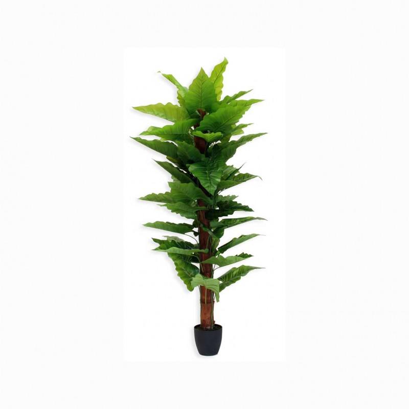 Pianta calla cm 180 pn122 85 14120371 piante e fiori for Calla pianta