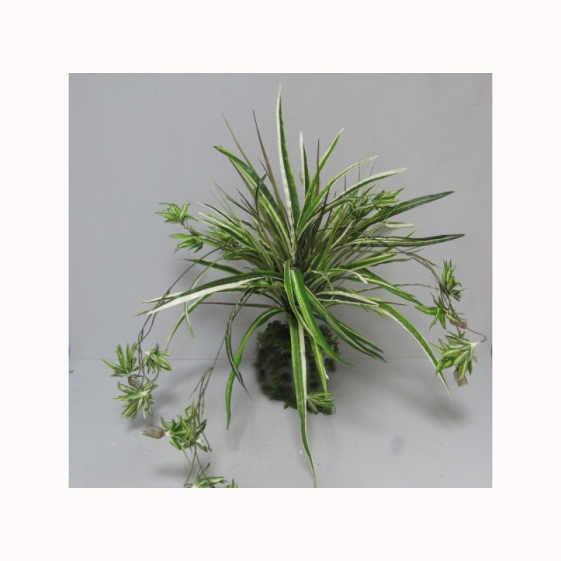 SPIDER PLANT X 8 - PN16,00  *