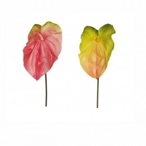 ANTHURIUM GIANT - AN8,20*