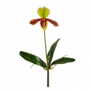 ORCHIDEA CIPRIPEDIUM - OR3,35*