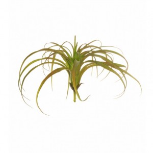 TILLANDSIA BUSH - TI5,85*