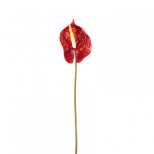 ANTHURIUM LARGE CM70 - AN1,90*