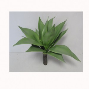 AGAVE PLANT 20