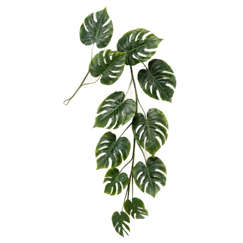 MONSTERA CADENTE 80CM-CD37,05*