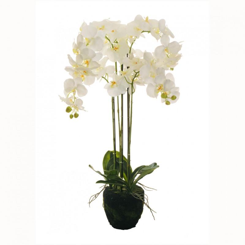 Pianta orchidea cm 90 or94 00 80 271389 piante e fiori for Orchidea pianta
