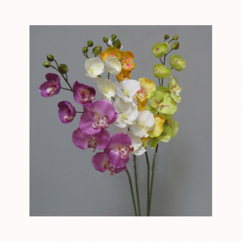 ORCHIDEA PHAL. X10 - OR1,80 *