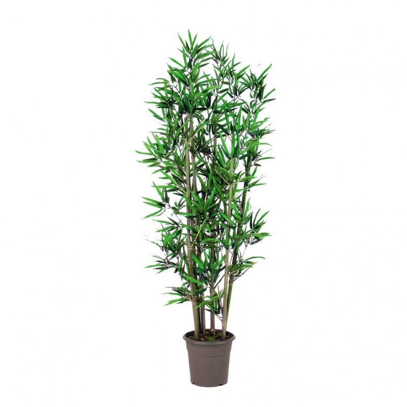 Pianta bambu 39 cm 175 pn135 10 ip 161 g piante e fiori for Pianta bambu prezzo