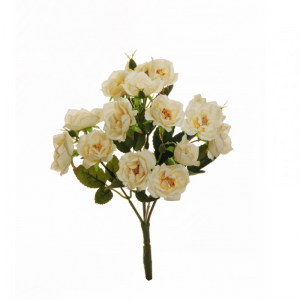 ROSE MARY BUSH X5 CM 30 - RO2,78*
